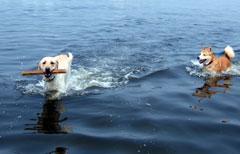 極寒の海で遊ぶ図